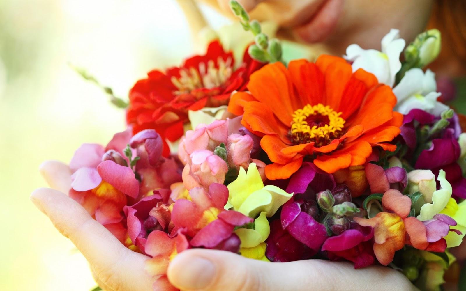 Fondos De Pantalla De Flores Hermosas: Fondo De Pantalla Flores Coloridas