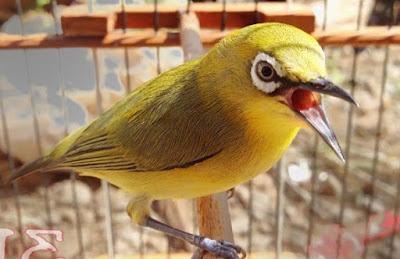 Harga Saat Ini Terbaru Aksesoris Sangkar Burung Pleci Paling Lengkap