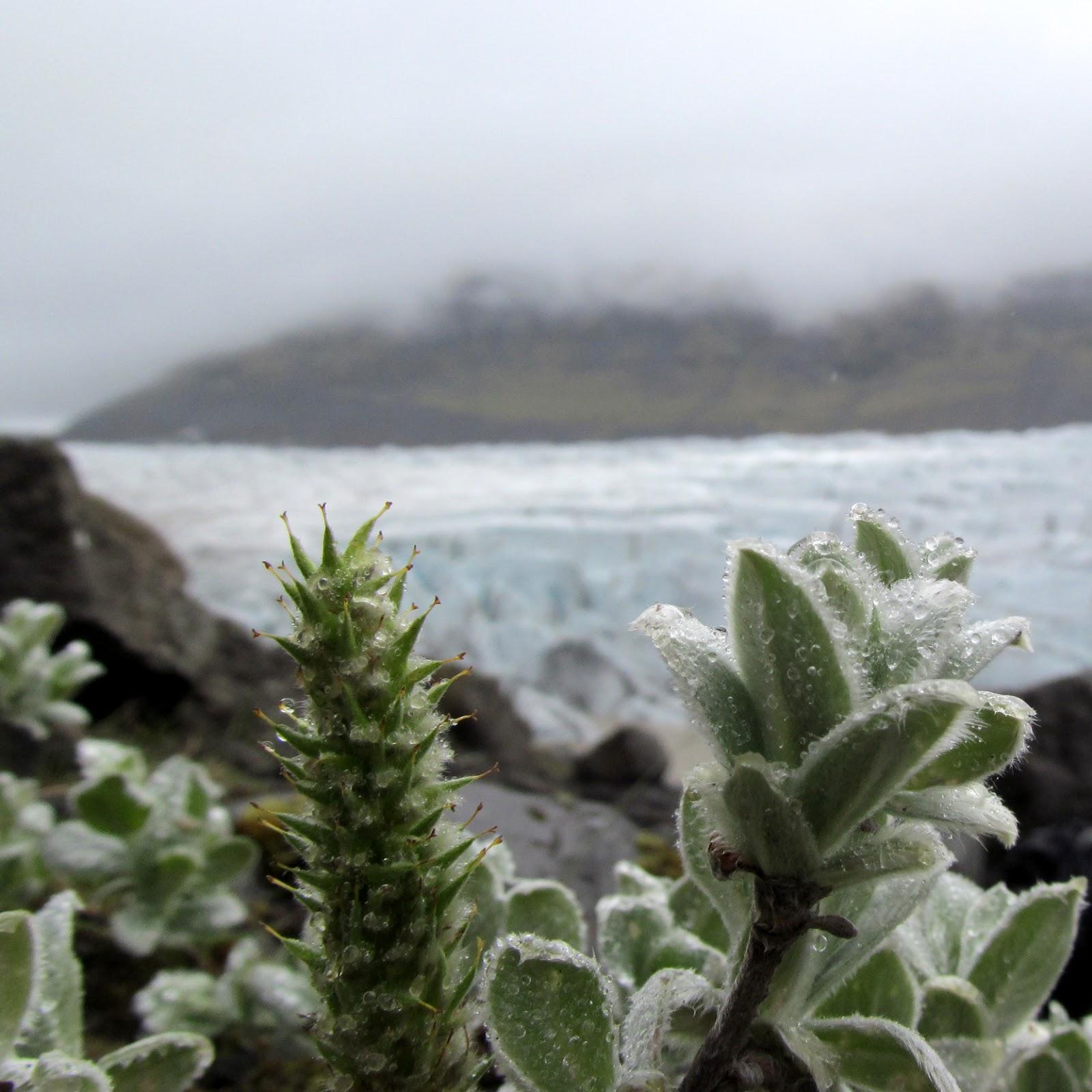 Draussen: Gletschervegetation