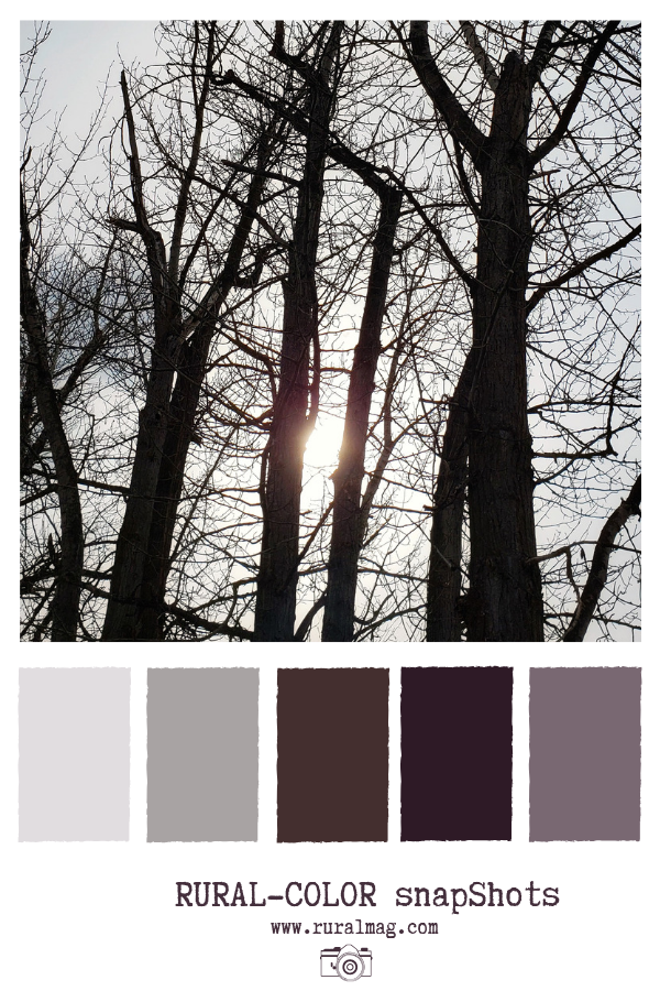 bare tree branches and plum toned colour palette from www.ruralmag.com