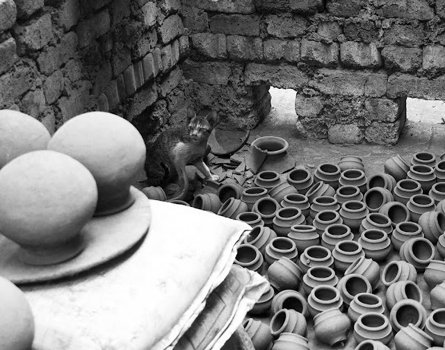 monochrome monday, black and white weekend, cat, kitten, pots, kumbharwada, dharavi, mumbai, india,