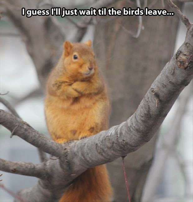 Funny Waiting Squirrel Meme - I guess I'll just wait til the birds leave joke picture