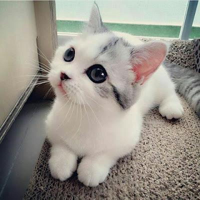 Beberapa Manfaat Ketika Melihat Video Kucing 1