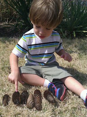 playing with pinecones