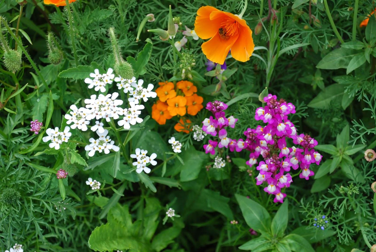 Vegetable Garden Update July 13, 2014! Pacific Northwest