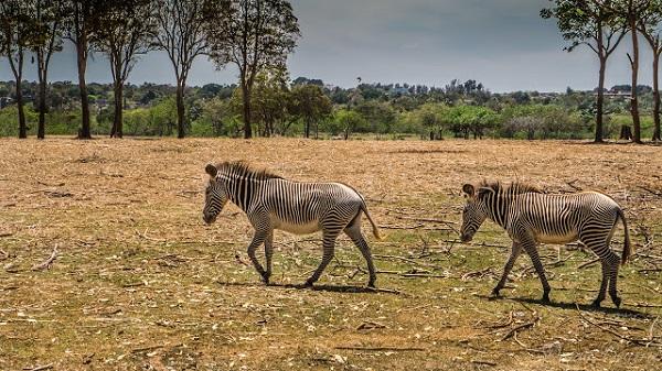 zoologico-nacional-de-cuba