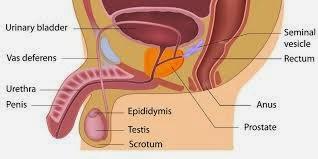 Image Muncul benjolan daging kecil di daerah genital