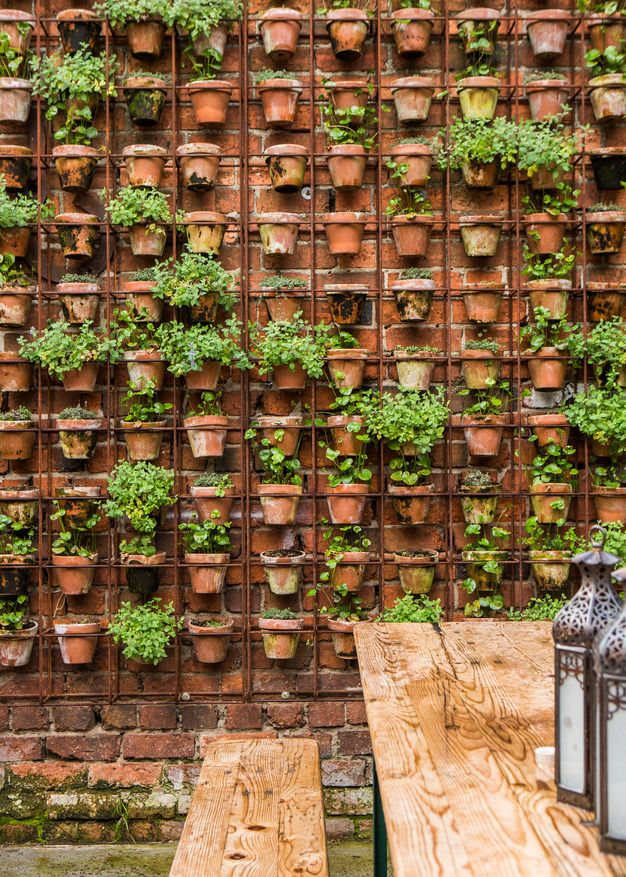 plant herbs in hanging terracotta pots