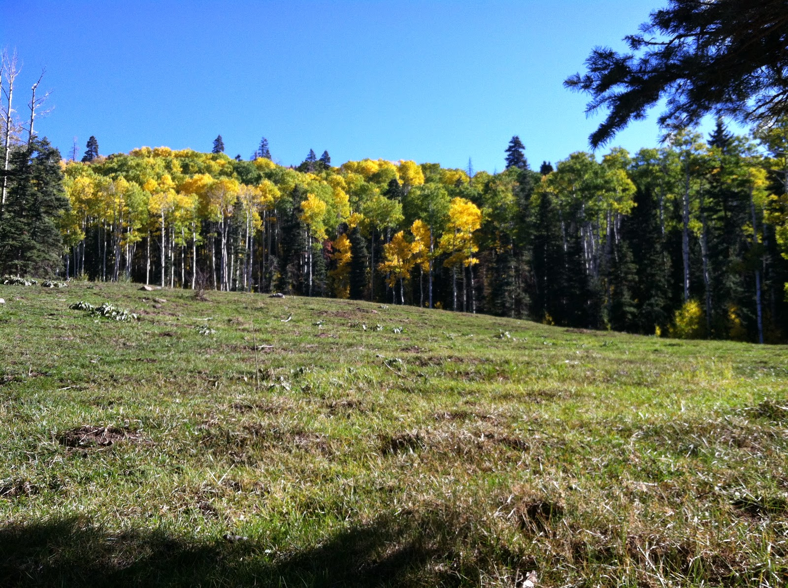Durango Vacation Journal Perfect Place To Go Camping