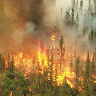 Animals Plants Rainforest Forest Fires Impact on Social