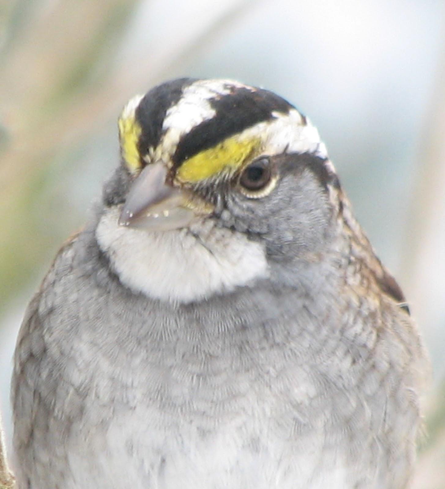 birds in south burlington vermont backyard bird photos south