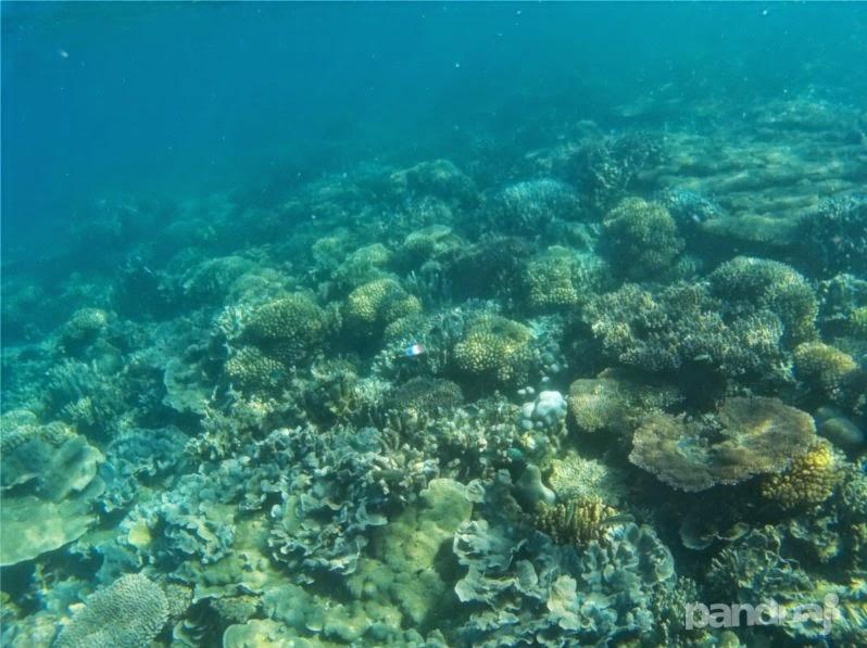 Foto Underwater Bawean