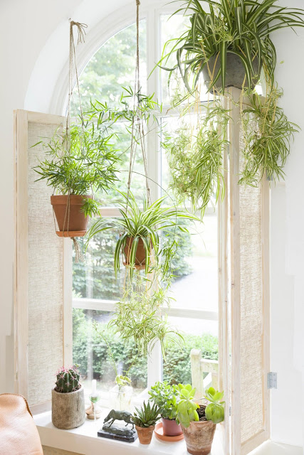 Cantinho verde ideias para ter plantas dentro de casa - How to hang plants in front of windows ...