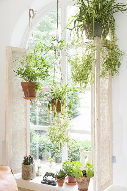 pendure-plantas-decoração
