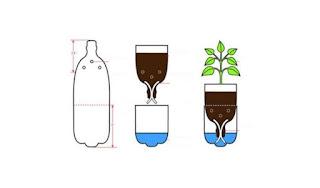 Cara Menanam Hidroponik dengan Botol Bekas (5 Tahapan)