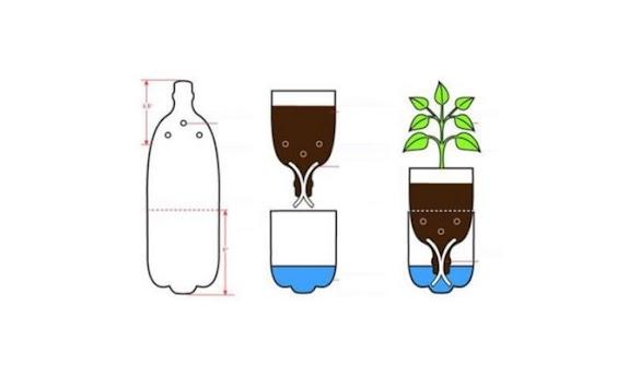 Cara Menanam Hidroponik dengan Botol Bekas Melalui 5 Tahapan