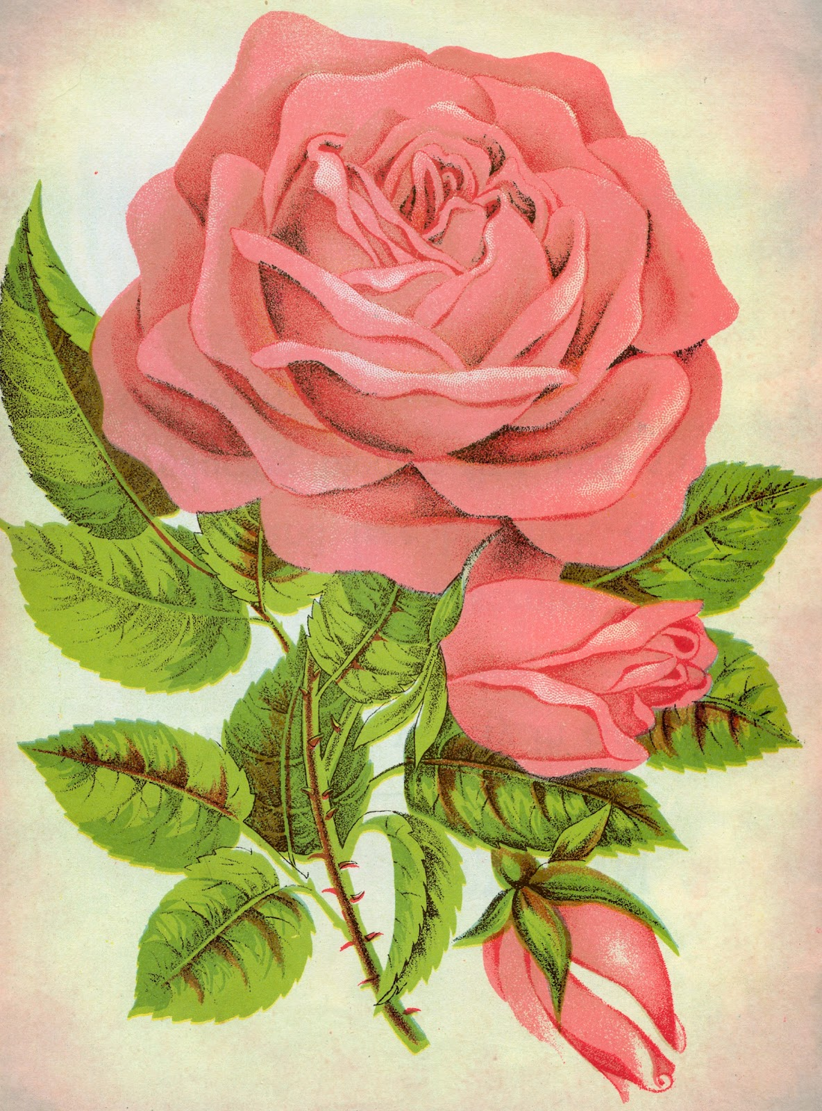 Розы открытка рисунок