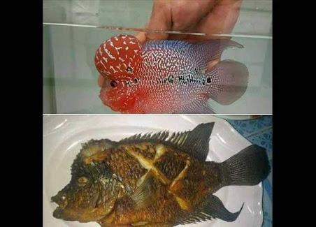 Minta Pembantu Untuk Masak Ikan Segar, Majikan Kaget Setelah Melihat Ini..