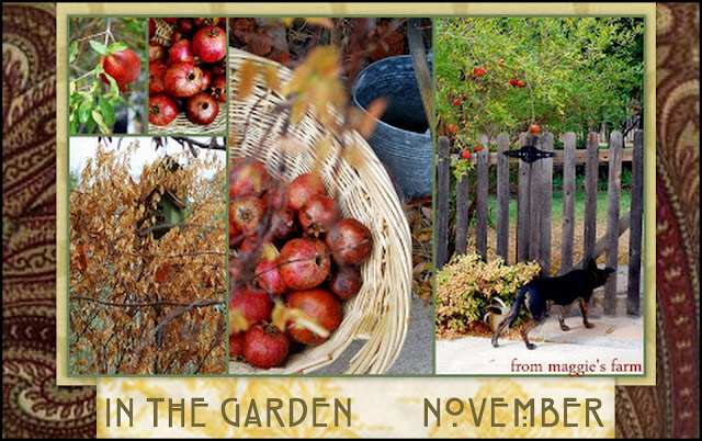 Notes From Maggie S Farm In The Garden November Monthly
