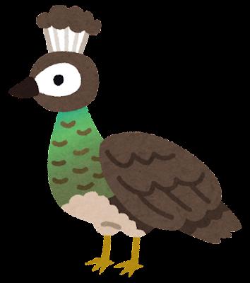 孔雀のメスのイラスト