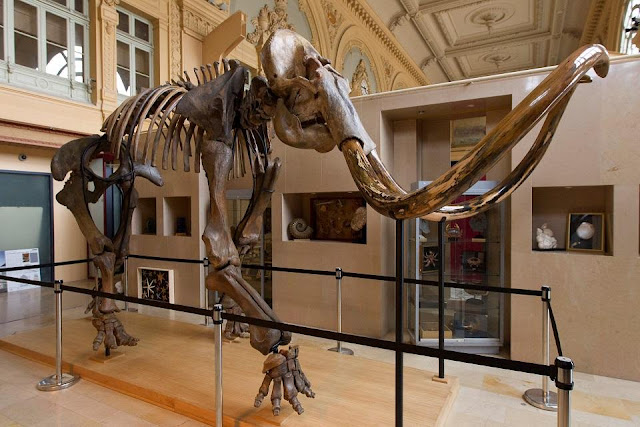 15,000 year old mammoth skeleton up for auction in France