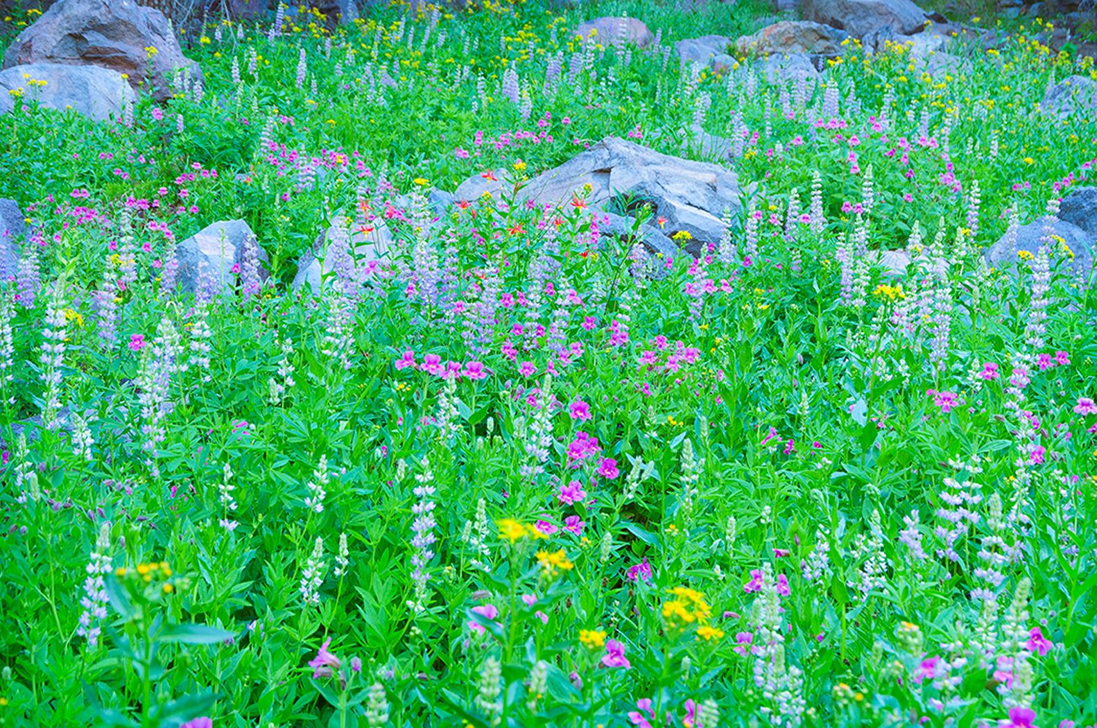 Linda cochran s garden native plants