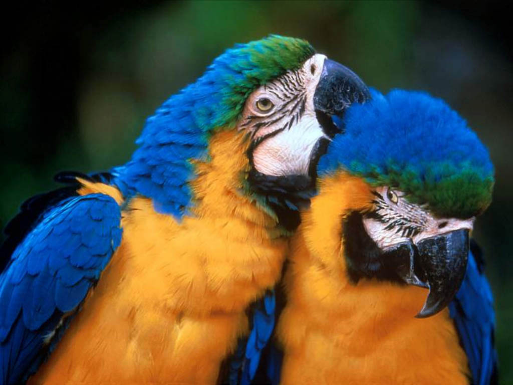 Animals in Love wallpapers, pictures, snaps, images, photo ...