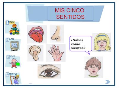 Resultado de imagen para los 5 sentidos con atenex interactivos