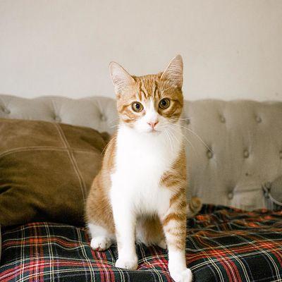 gato con botas subido en el hombro