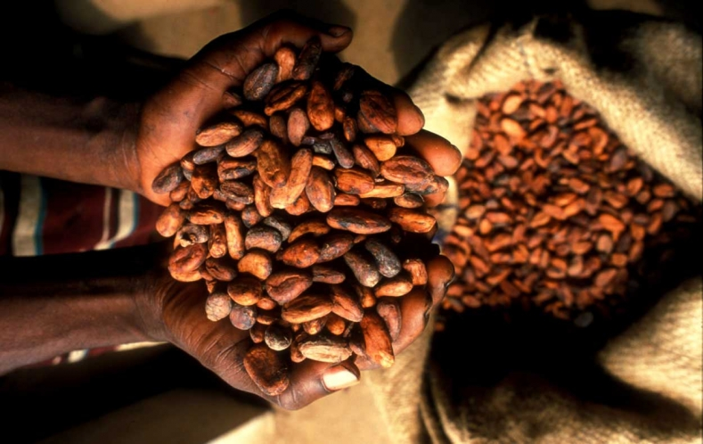 Ghana's Cocoa Processing Industry: An Attractive Investment
