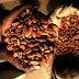 Ghana's Cocoa Processing Industry: An Attractive Investment Option