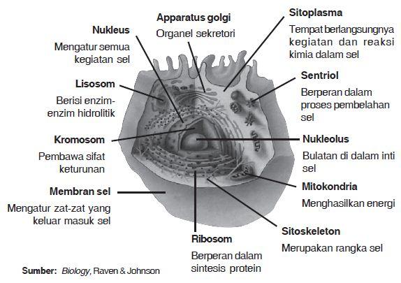 Susunan Sistem Tingkat Organisasi Kehidupan dalam Tubuh Makhluk Hidup