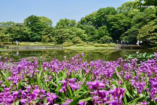 Tokyo in viaggio con bambini for Laghetti nei giardini