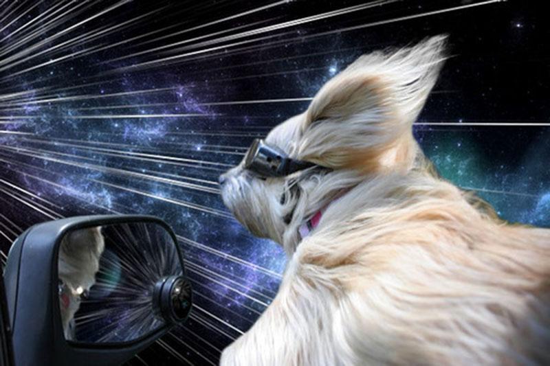 warp dogs by Benjamin Grelle