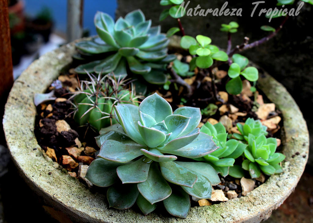 Naturaleza tropical ideas para decorar con plantas suculentas for Macetas de piedra para jardin
