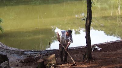 Bizzarri trabalhando, fazendo a execução dos muros de pedra em volta do lago, acertando a terra para fazer os caminhos de pedra com pedra cacão de São Tomé.