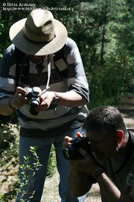 http://www.biodiversidadvirtual.org/insectarium/Participantes-Testing-Punto-BV-Espacio-Pirineos-Graus-9-5-2015-img691435.html