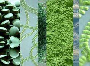 Dưỡng chất có trong tảo xoắn xanh Nhật Bản