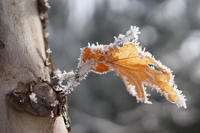 Tháng 12 là tháng lạnh nhất của một năm