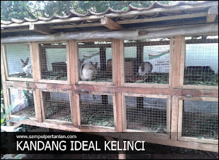 Ukuran kandang kelinci yang ideal untuk ternak dan hobi