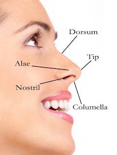 Bagian Bagian Hidung