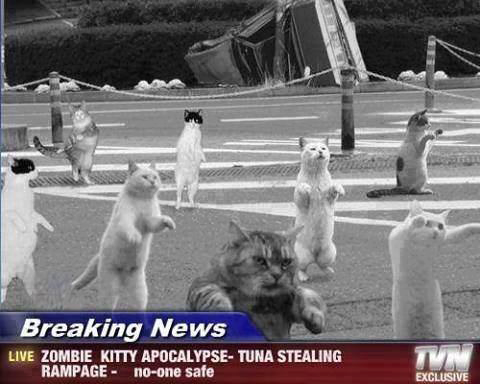 cat zombie, breaking news