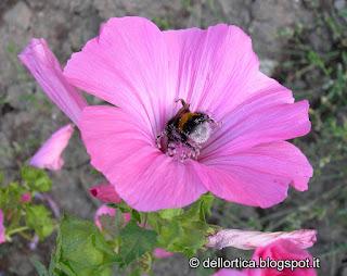 bombo insetti a Savigno Valsamoggia Bologna Zocca fattoria didattica