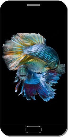 Underwater Fish - Fond d'Écran en FHD pour Mobile