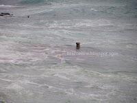 nevrijeme olujno jugo plima Postira slike otok Brač Online