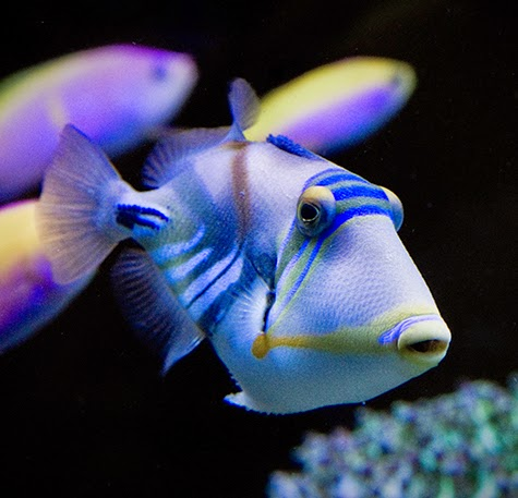 Caution 10 Popular Animals That May Not Be Reef Safe