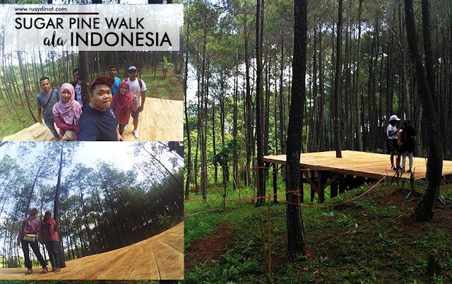 Wisata alam di Indonesia, Hutan Pinus Yogyakarta, tempat rekreasi keluarga