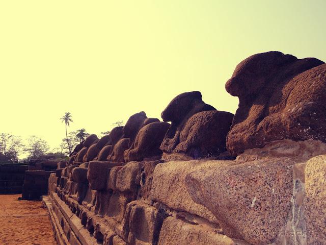 Nandi sculptures of Shore temple - UNESCO World Heritage Site - Mahabalipuram India - Pick, Pack, Go
