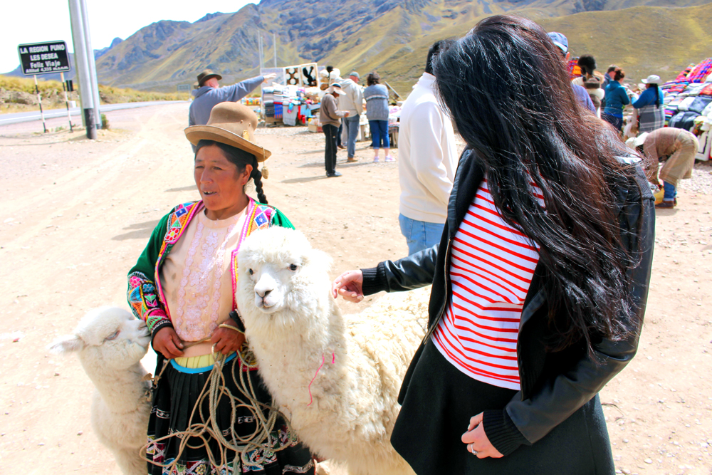 Alpacas in Puno, Peru - travel blog