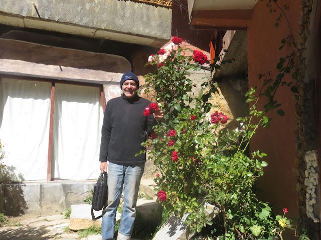 Rosen auf 3.800 Meter Höhe